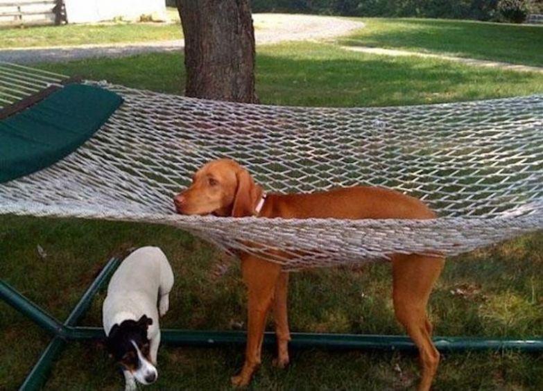А ведь хотел просто полежать, отдохнуть. животные, застряли, приколы