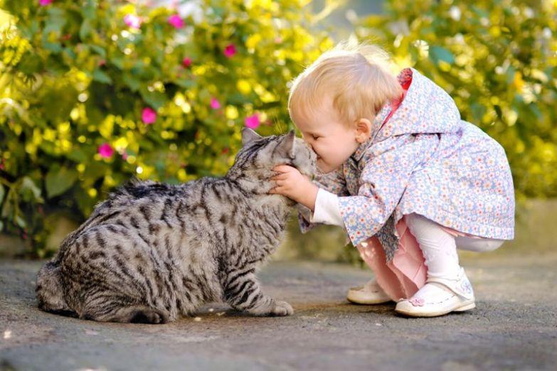11. Поцелуи кот, малыш, очарование
