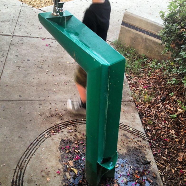 Собака и хозяин пьют вместе: из верхней чашки вода стекает в нижнюю, предназначенную для собак нестандартно, оригинально, проблемы, решения