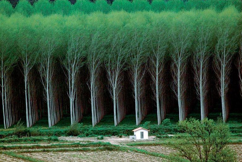 Таинственный лес искусство, мастерство, фото