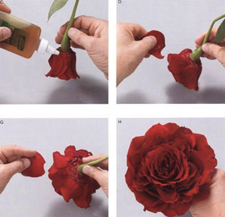 Цветы, собранные из отдельных лепестков. низкое качество, обман, флористика, цветы