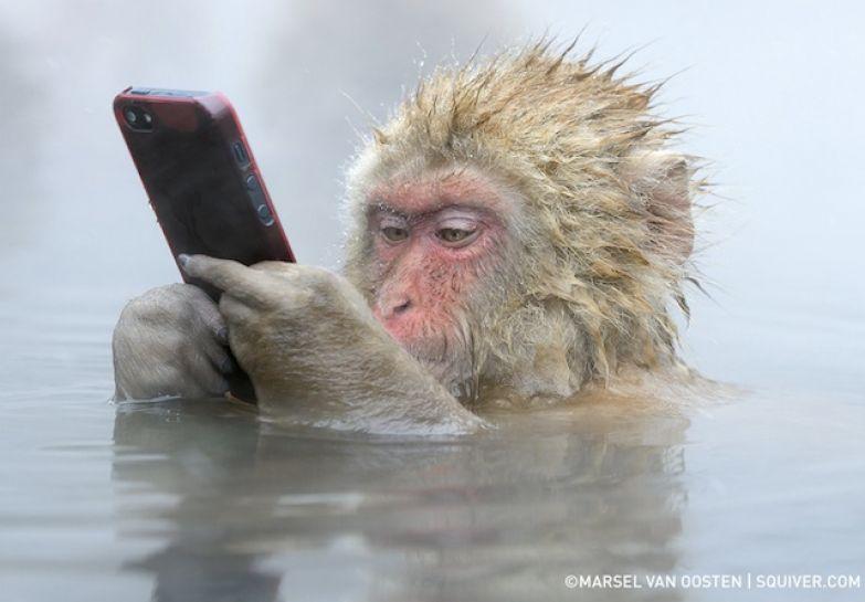 Обезьяна с мобильником