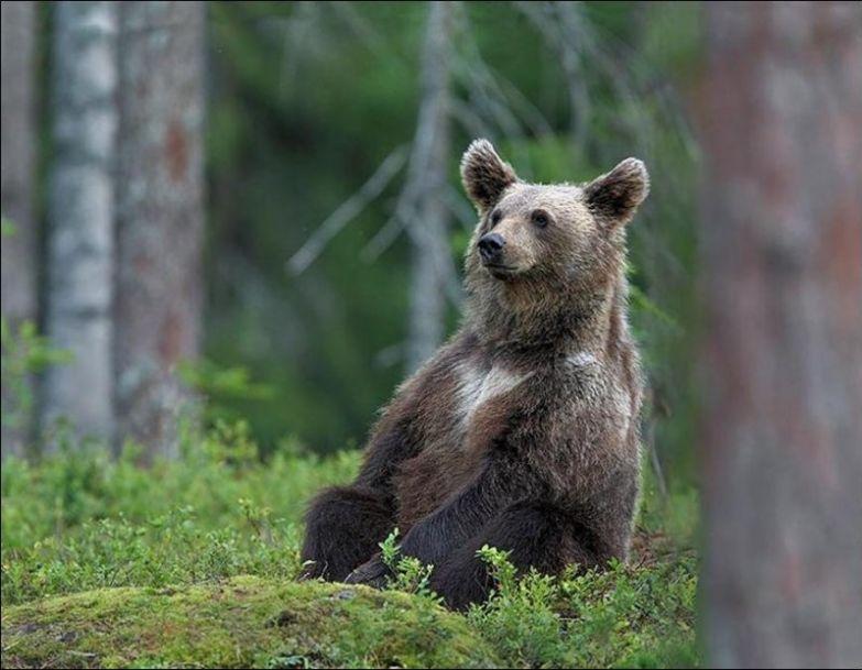 Медведи 8