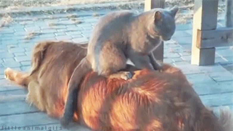 животные, кот, кошка, это интересно