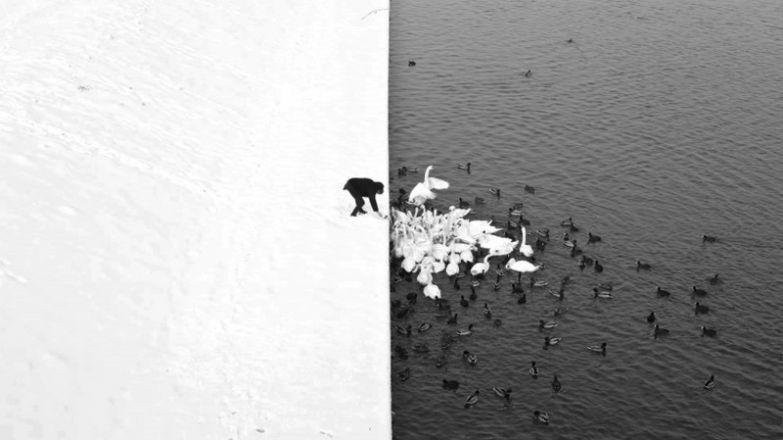 Кормёжка птиц с причала без фотошопа, природа, удивительные фото, человек