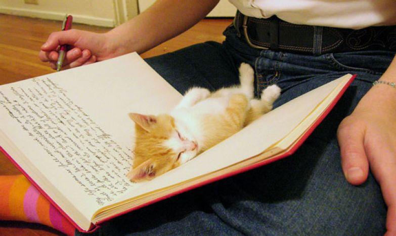 20. О, приветик! Ты читал?