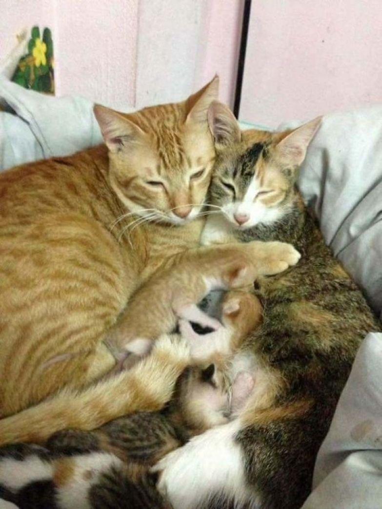 Отец-молодец! ) кот, семья, отец-молодец, длиннопост