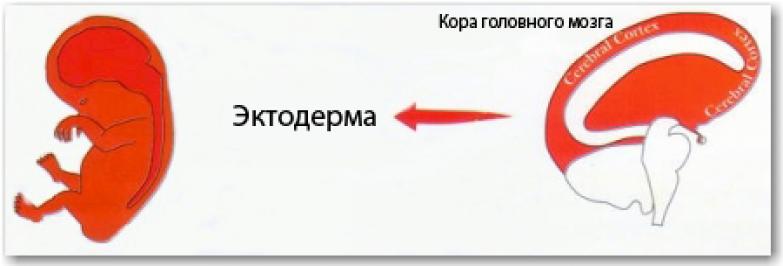 рис24р