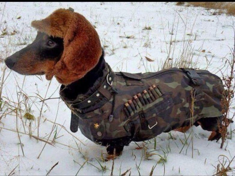 Верный пес - половина успеха на охоте охота, прикол, юмор