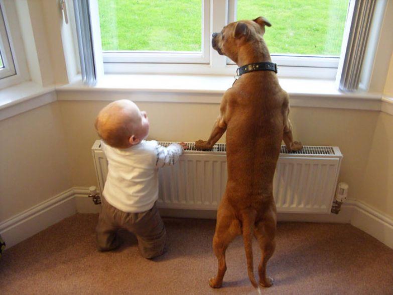 Крупные собаки и дети 5
