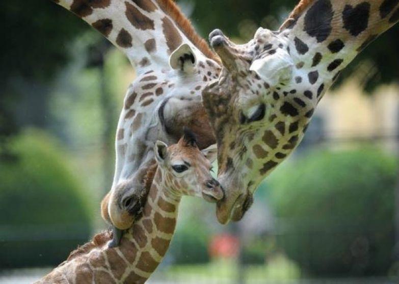 Любовь животных 12