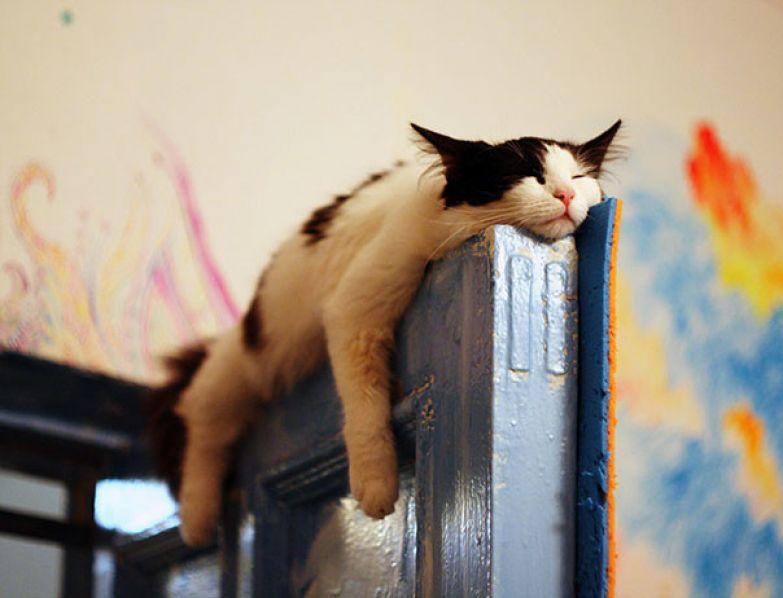 34. Сон на двери животные, кошка, сон