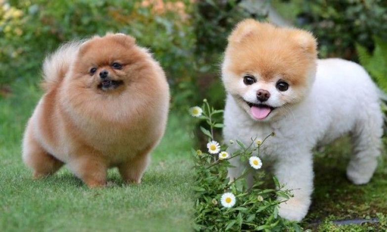 рейтинг собак для детей