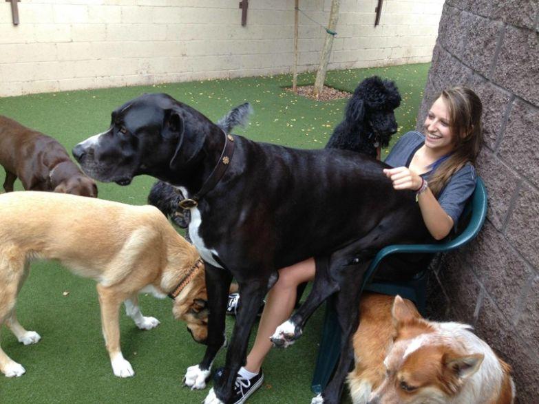 Эти собачки до сих пор думают, что они - щеночки животные, интересное, собаки
