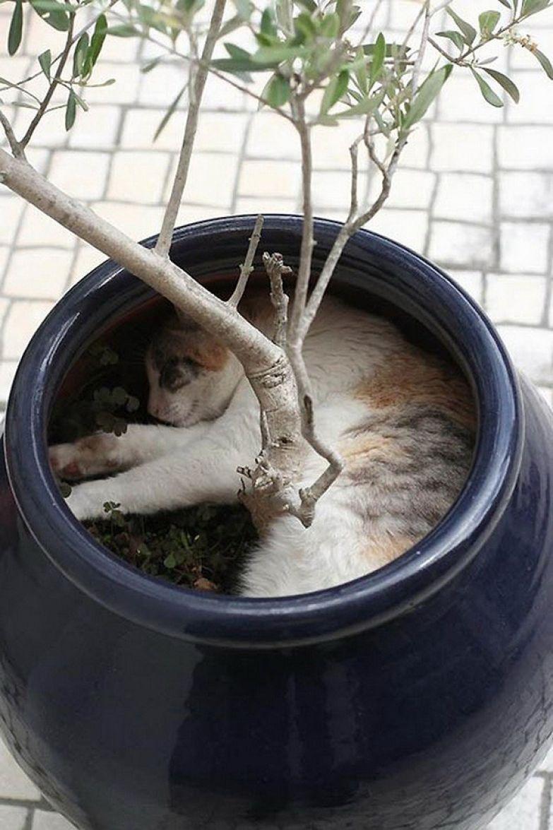 45. Под деревом животные, кошка, сон