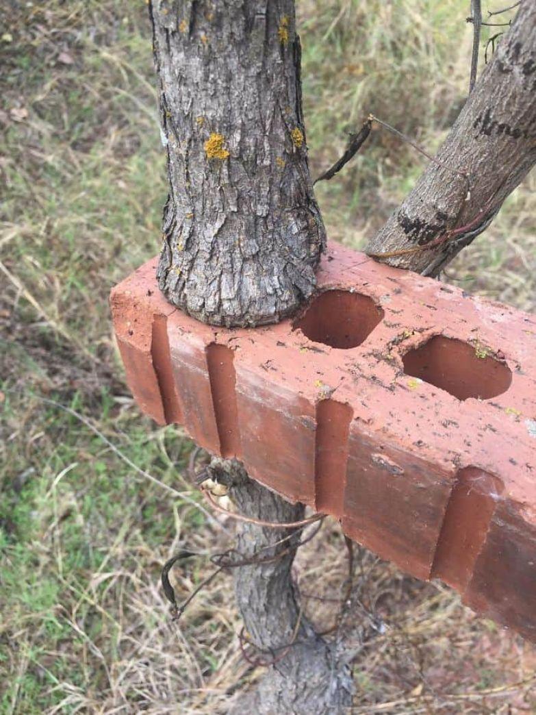 This Tree Grew Inside This Brick
