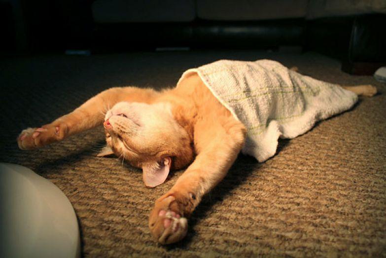 35. Настоящее расслабление животные, кошка, сон