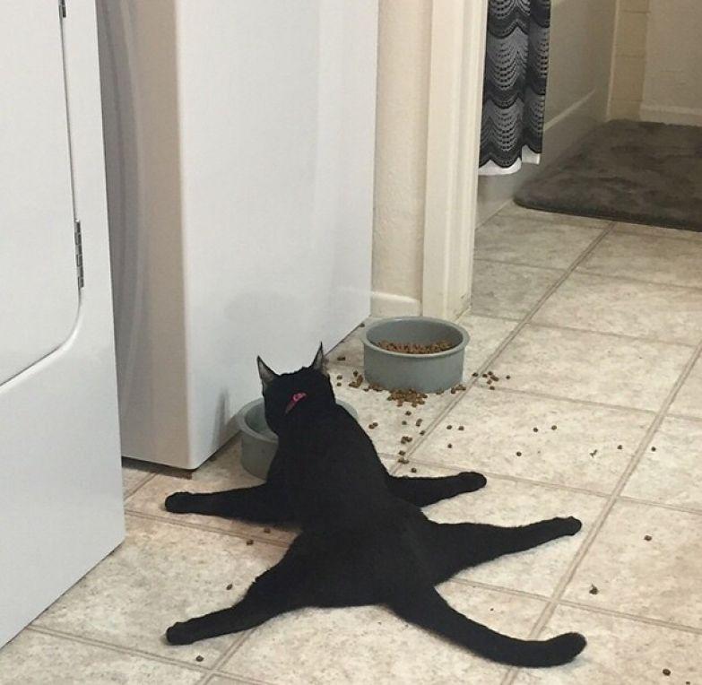 1. Так обедает кошка моего друга.