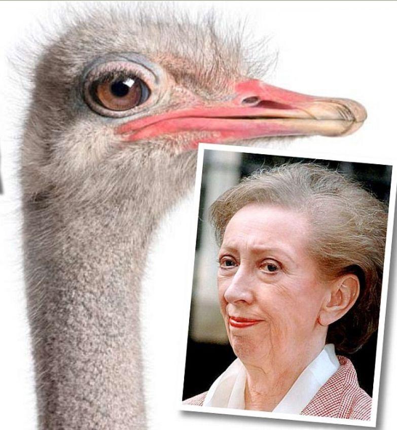 Margaret Beckett британский государственный деятель, депутат Палаты общин по всей видимости любит прятать голову в песок в прямом смысле политики, прически, смешно, удивительно