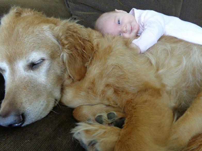 Крупные собаки и дети 4