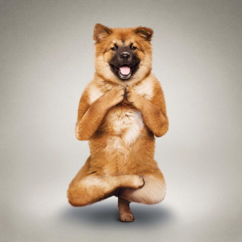 Животные  йога 14