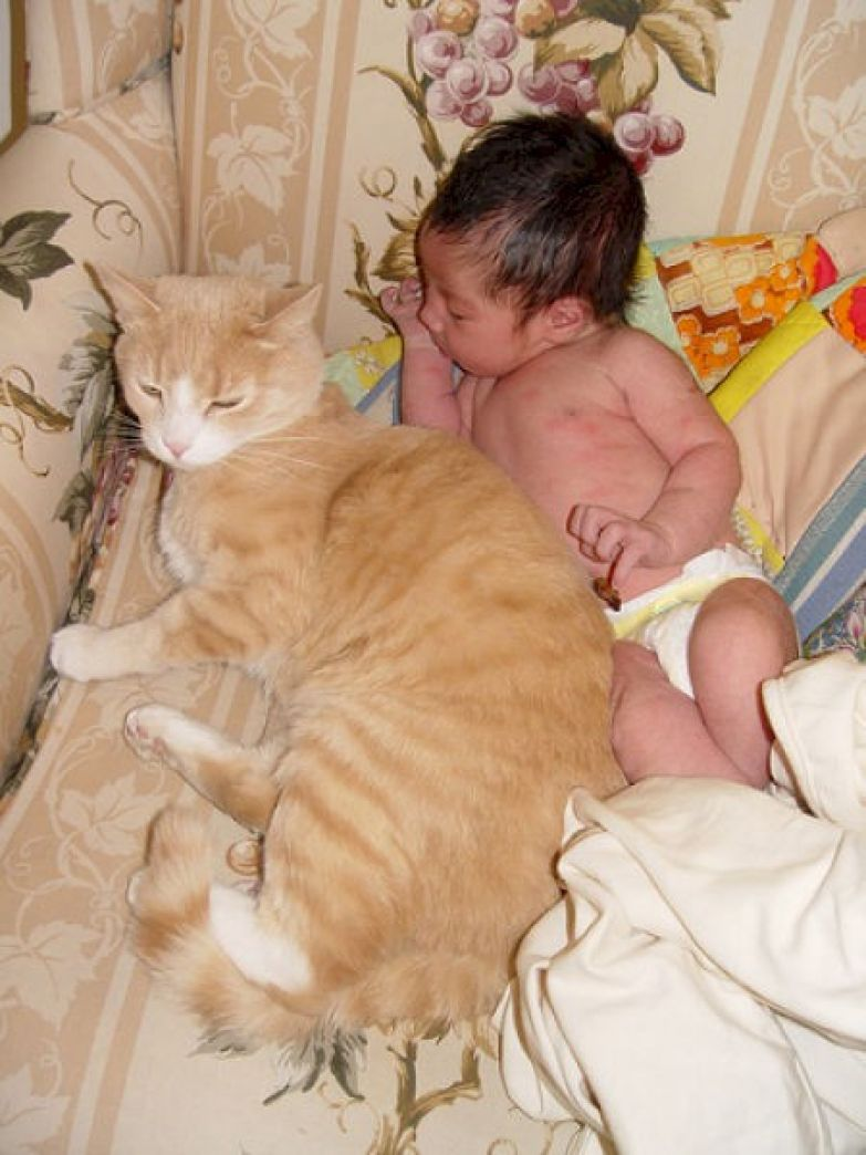 14. Сонные и любопытные кот, малыш, очарование