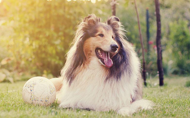 Картинки по запросу Выберите понравившуюся собачку и узнайте какая любовь ждет вас в 2018 году Желтой Собаки