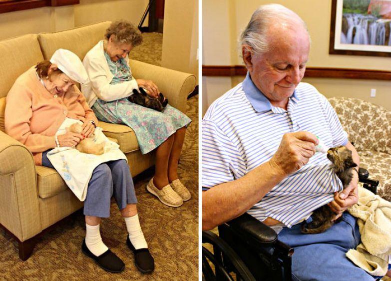 12. Постояльцы дома престарелых помогают приюту выхаживать котят доброта, мир, поступок