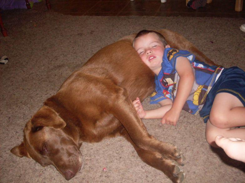 14. Пёс, похоже, привык к такому. дети, дети спят