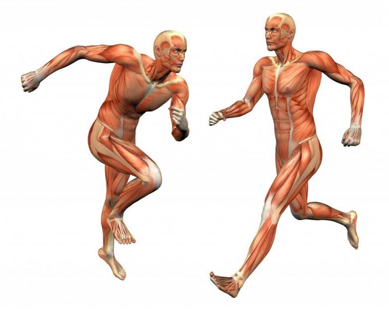 Фармакологические препараты восстановление спортсмена стероиды для спортсменов