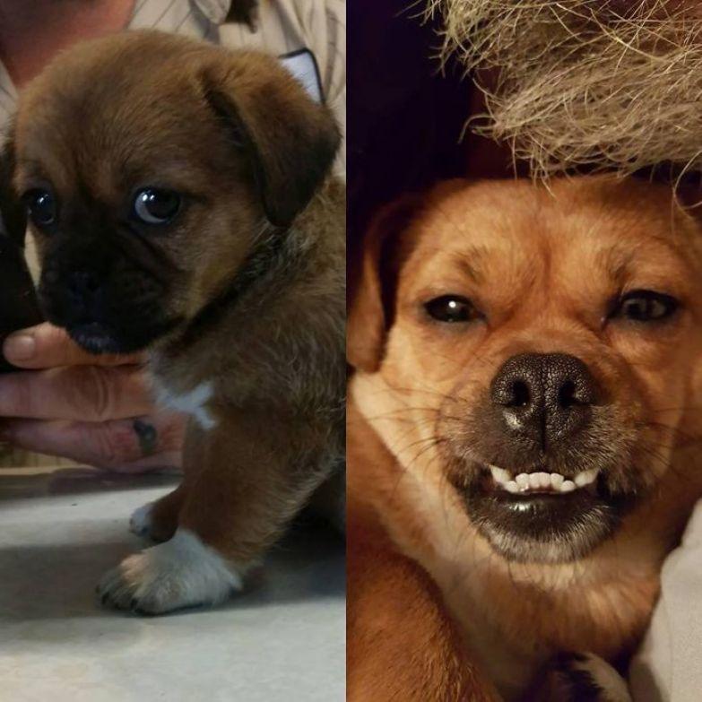 Мейбл в 6 недель - и в 2 года до и после, животные, любимцы, мило, питомцы, собаки, трогательно, фото