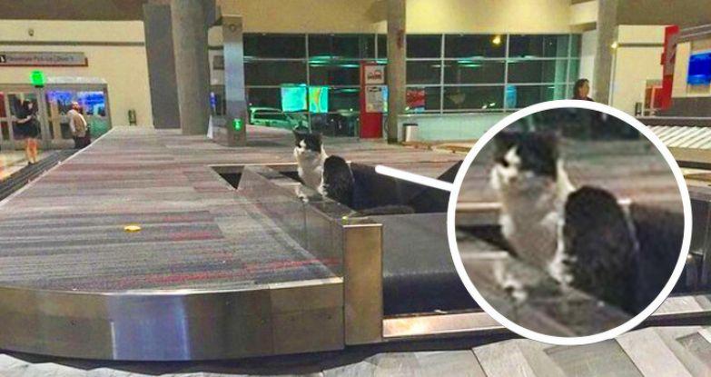 20+ метких снимков из аэропорта, которые оценит любой авиапассажир
