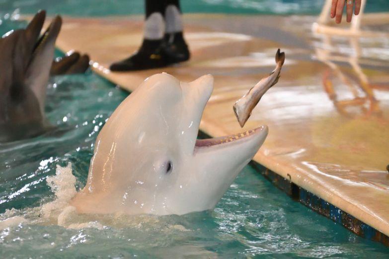 8заблуждений, из-за которых мыдосих пор верим, что дельфинарии— отличное развлечение