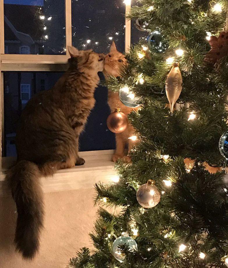 Эта фотография целующихся кота с кошкой у рождественской елки просто свела мир с ума. Любовь, животные, кот