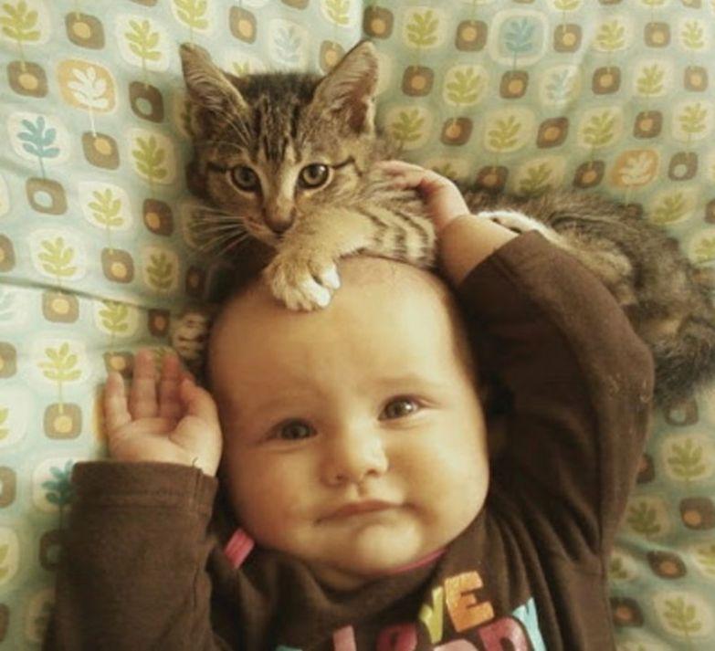 """4. """"Мой!"""" кот, малыш, очарование"""