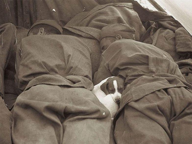 12. Русские солдаты и спящий рядом с ними щенок во время Второй мировой архивные фотографии, лучшие фото, ретрофото, черно-белые снимки