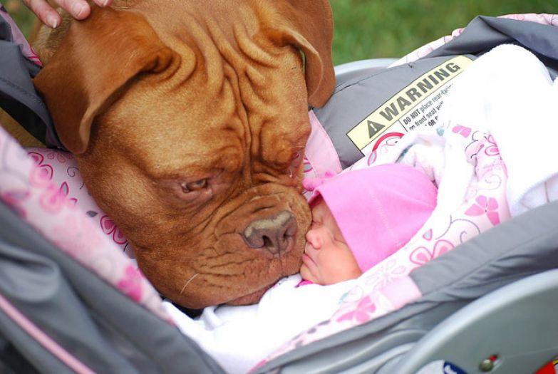 Крупные собаки и дети 13