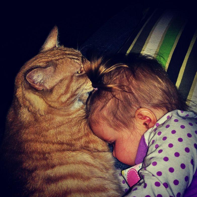 2. Какие нежности кот, малыш, очарование