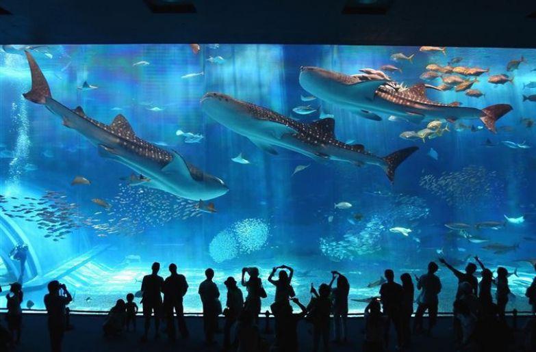 17. Аквариум в Окинаве, Япония люди, мир, фотоподборка