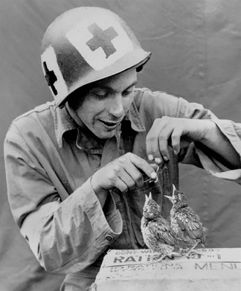 33. Военный медик кормит голодных птенцов архивные фотографии, лучшие фото, ретрофото, черно-белые снимки