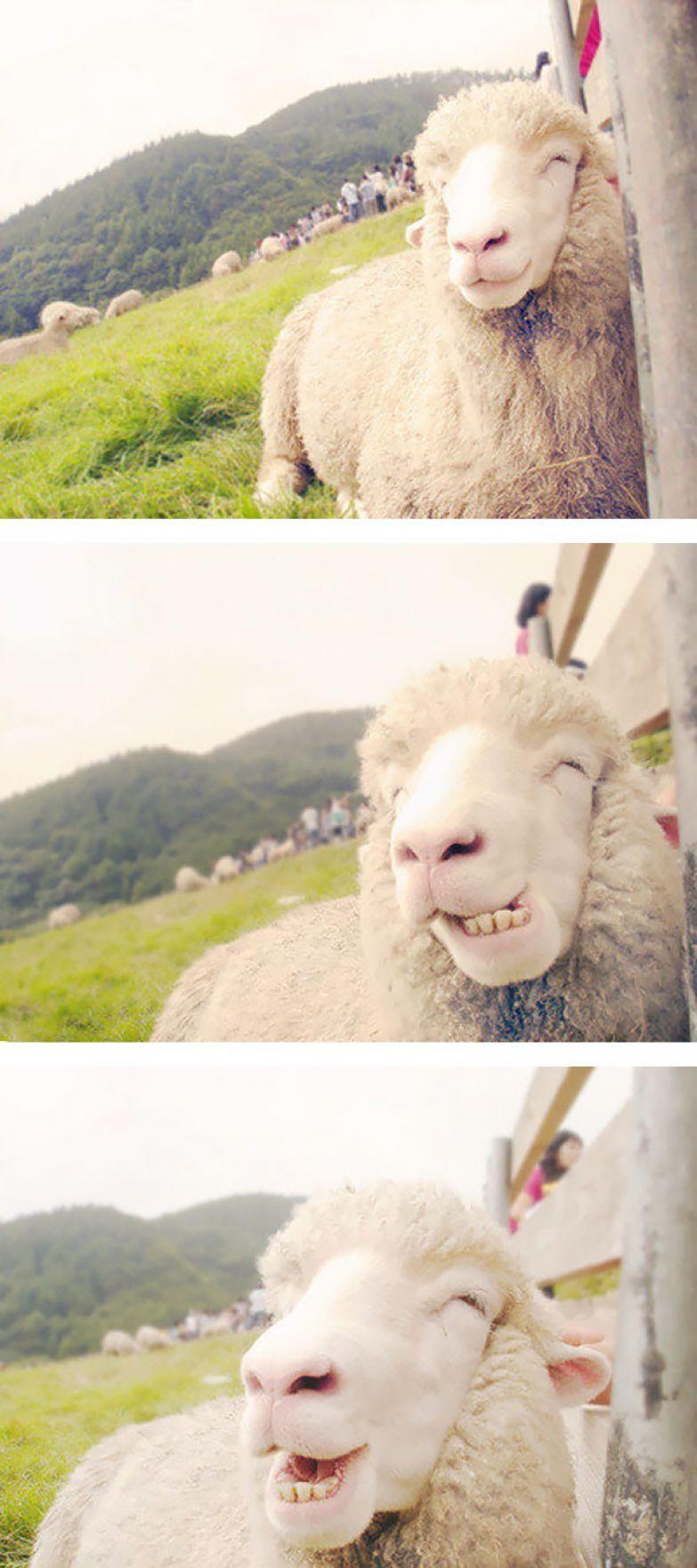 24. животное, улыбка