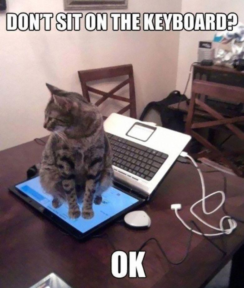 8. Не сидеть на клавиатуре?