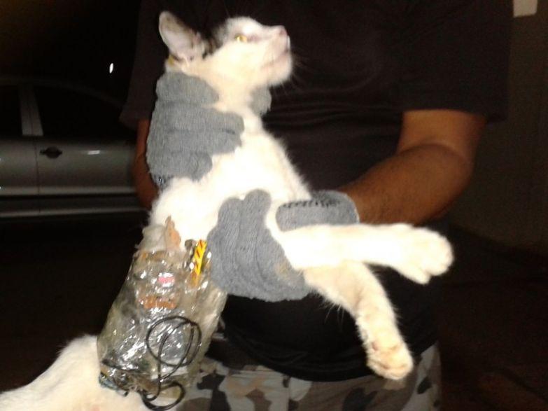 Котики-наркотики контрабанда, прикол, смешно, фотографии