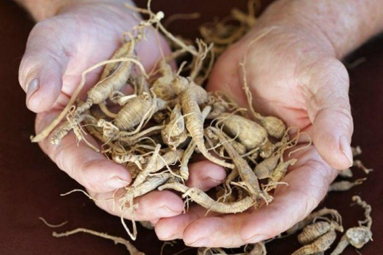 лекарственные корни растений