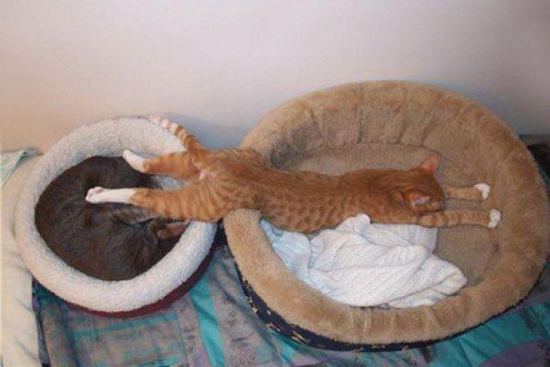 13. Двойная кровать.