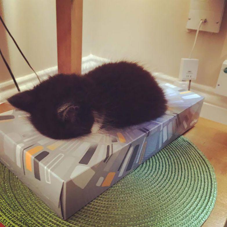 7. Удобная коробочка салфеток животные, кошка, сон