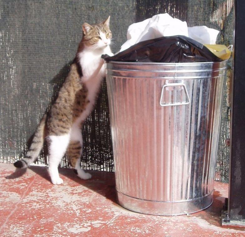 10 фактов о характере и поведении кошек, которые рассказала зоопсихолог