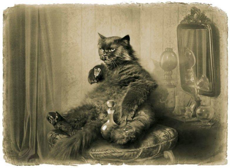 На ювелиршином пуфе в развязной позе развалился некто третий, именно – жутких размеров черный кот со стопкой водки. «Мастер и Маргарита». Фотоиллюстрации Елены Мартынюк.