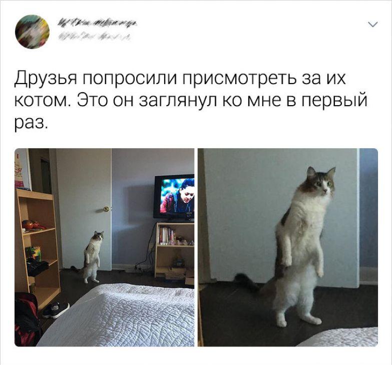 20+ твитов о том, что коты — это филиал цирка на дому