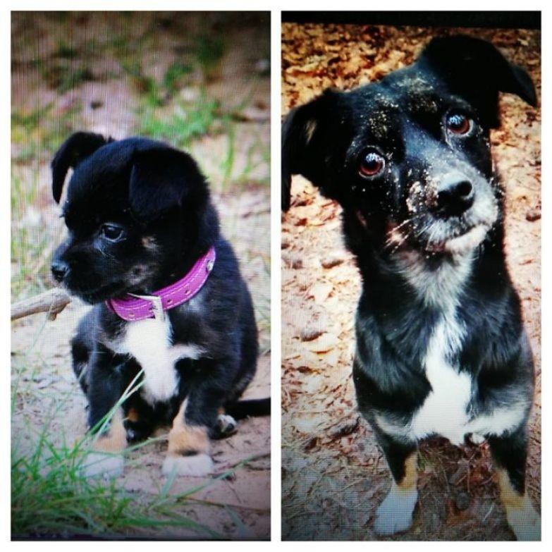 7 недель и 5 лет до и после, животные, любимцы, мило, питомцы, собаки, трогательно, фото